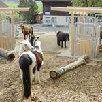 Active Horse Systems von Schauer-Agrotronic