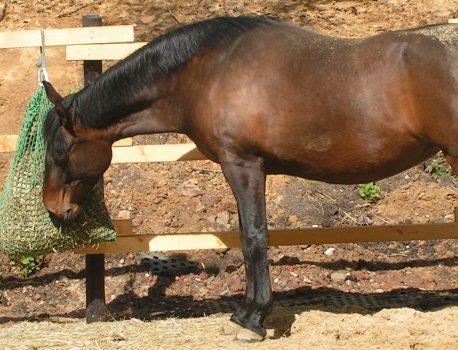 Stallwissen für Pferdebesitzer